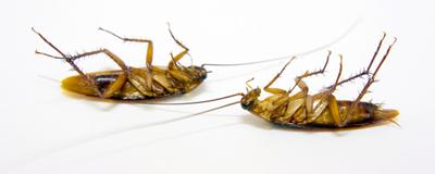 dead-bug